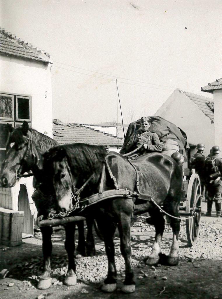 Soldat Karl Paulmaier auf einem Pferdewagen.